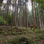 Ferienwohnung Küper - Wald