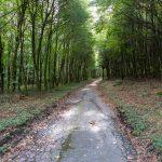 Ferienwohnung Küper - Waldweg