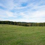 Ferienwohnung Küper - Wald und Wiese